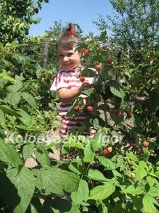 Клематис Heritage Raspberry